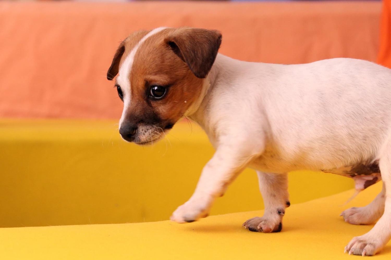 Hausmittel gegen Hundeurin