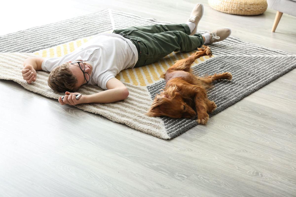 Haustiere und Teppiche in Braunschweig