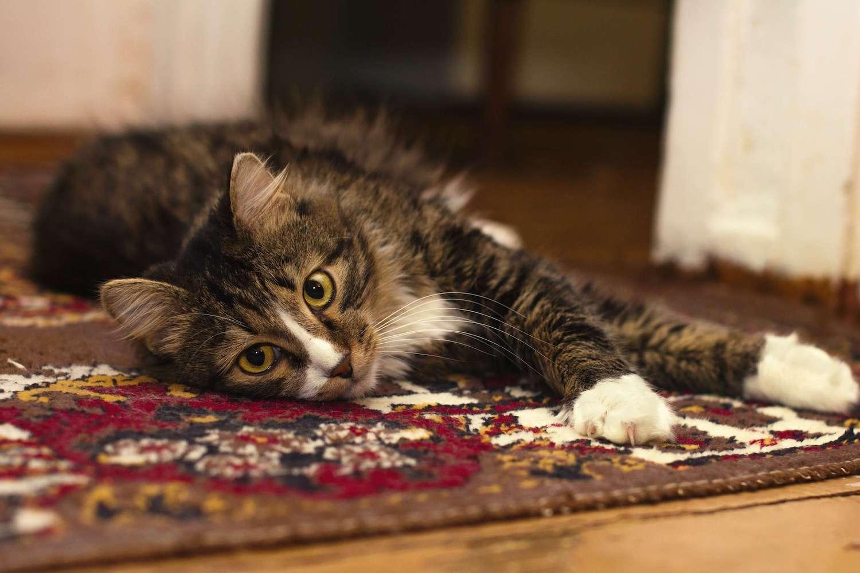 Wie entfernen Sie Motten aus dem Teppich