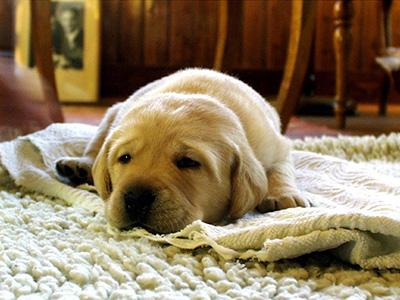 Vorteile eines Teppichs