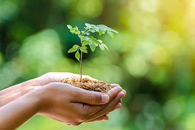 Wir pflanzen für jeden Auftrag einen Baum