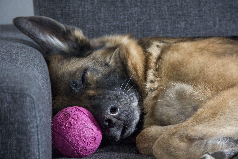 perfekte_couch_finden