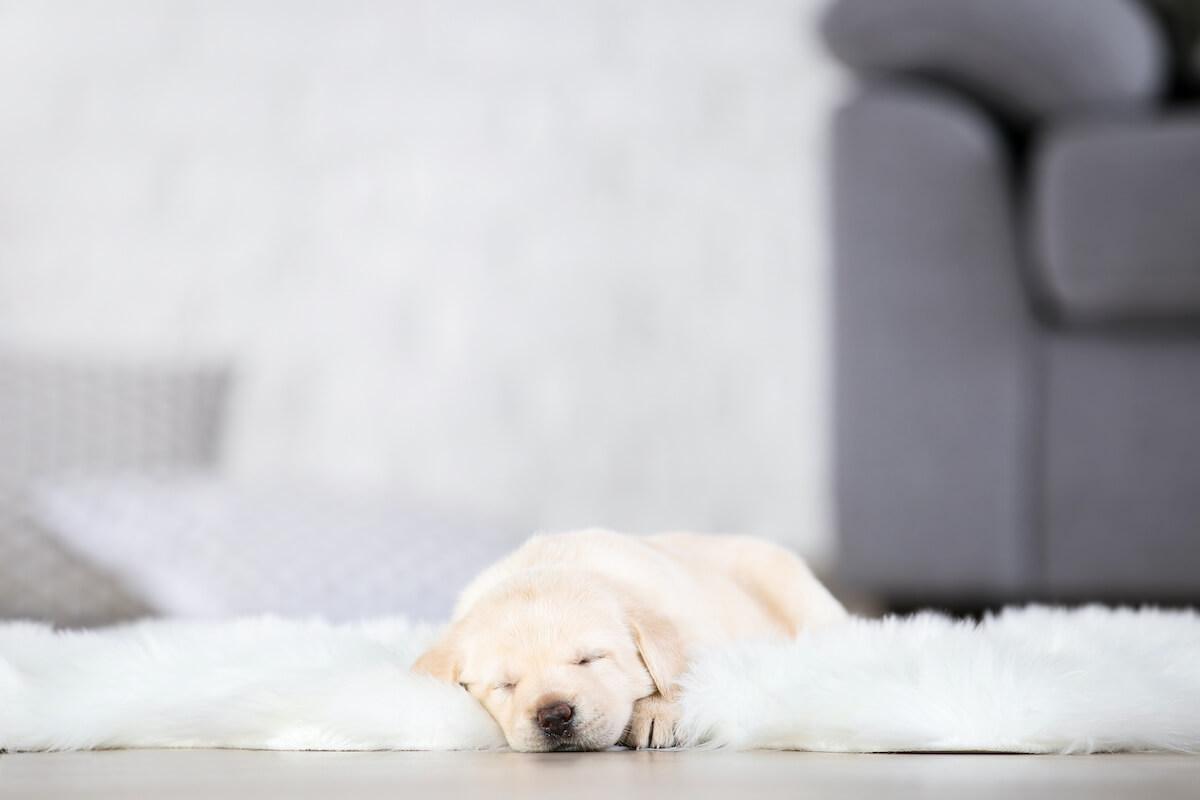 Woher kommen Teppiche eigentlich